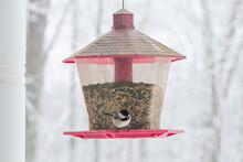 Carolina Chickadee Feeding From Bird Feeder On Snowy Day