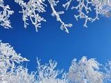 Fototapeta Na ścianę - Zimowe, mroźne pejzaże w okolicy góry Ślęża. Niebieskie niebo i zamarznięte drzewa.