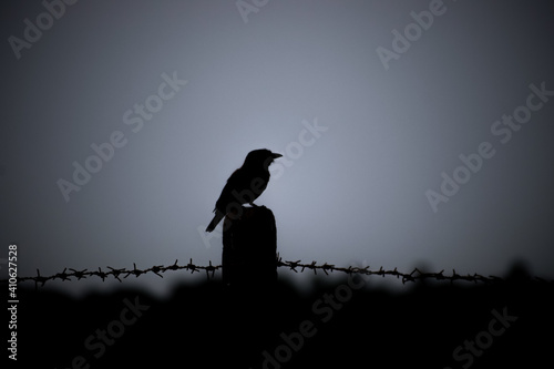 Silhouette of a medium-sized bird perched on the barbed wire fence post Fototapeta