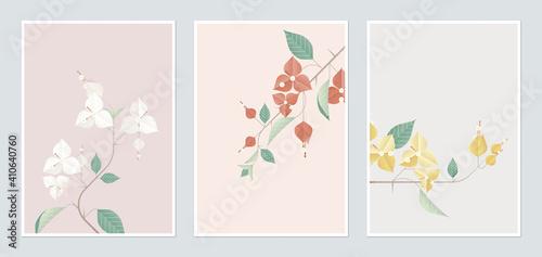 Fotografía Botanical poster template design, Bougainvillea in different color