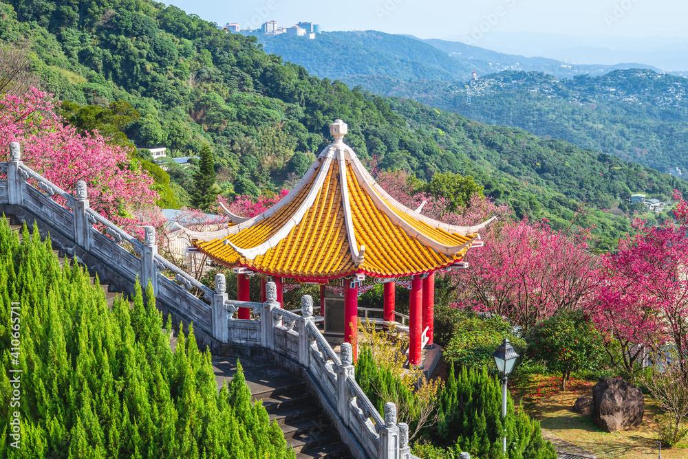 Fototapeta cherry blossom and chinese pavilion near taipei city in taiwan