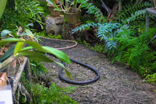 A Hose For Watering Plants Lies On A Path In A Botanical Garden Among Tropical Plants. Care Of Flowers And Trees.