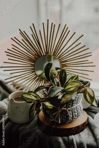 Rośliny i kawa