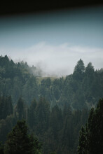 Beautiful Nature Scene Of A Densely Forested Area Under A Tranquil Daytime Cloudscape