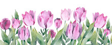 Horizontal Seamless Background With Colored Tulips.  Illustration.