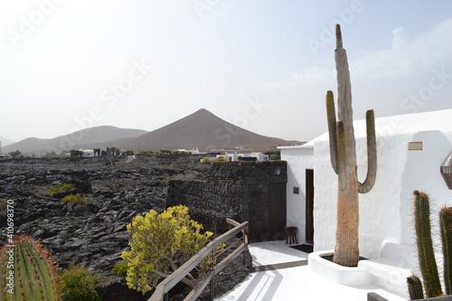 Fototapeta cactus