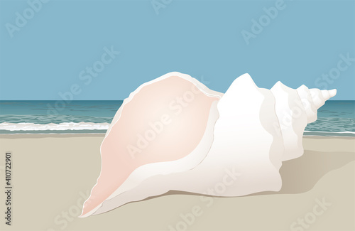 Obraz na plátně A bright white conch sea shell sitting on the beach