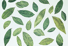 Dry Laurel Leaves On A White Background. Aromatic Herbs And Spices