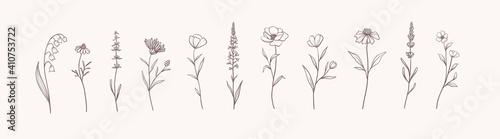 Fotografija Set of Herbs and Wild Flowers