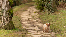 Young Female Yorkshire Terrier Dog On A Stone Path In The Middle Of Nature