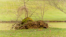 Uprooted Tree Stump By The Lake, Close Up