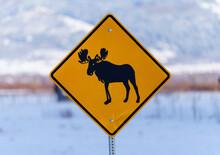 Moose Crossing Sign In Teton Valley Idaho