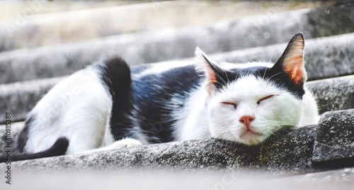 Fotografie, Obraz Close-up Portrait Of A Cat