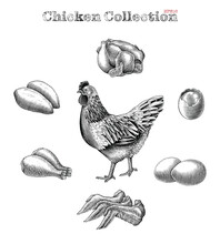 Chicken Collection Hand Draw Vintage Engraving Style Clip Art Isolated On White Background