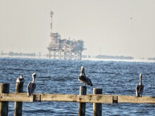 Seagulls Perching On Wooden Post In The Sea
