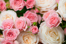 Background Of Beautiful White And Pink Roses In Vintage Style