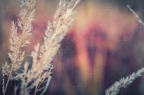 Tablou Canvas Close-up Of Wheat Growing On Field