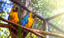 Two Beautiful Macaws In A Zoo