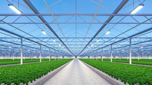 Big Industrial Greenhouse Interior. Hydroponic Indoor Vegetable Plant Factory. Green Salad Farm. Concrete Floor. 3D Render