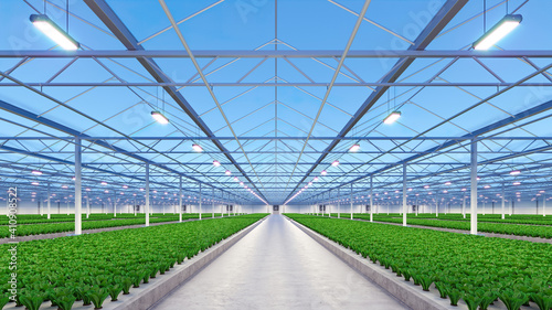 Fotografie, Obraz Big industrial greenhouse interior