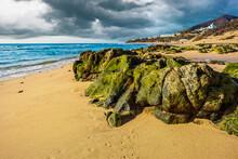 Algae Stones On A Sandy Beach