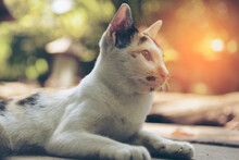 Lovely Three Color Kitten