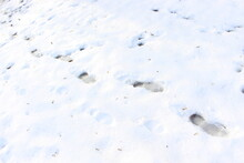 A Man Walked Through The Melting Snow And Left Footprints. The Footprints Were Frozen By Morning