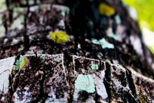 Closeup Shot Of An Old Tree Trunk Surface Covered With Moss And Lichen