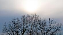 Ciel D'hiver En Fin De Journée Avec Arbre Sans Feuille Et Rapace Perché Au Sommet Surveillant La Campagne à La Recherche D'une Proie.