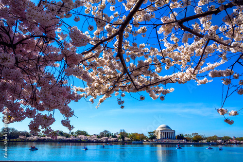 Photo Cherry blossoms tree during spring time lined up in Washington DC's river bank