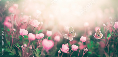 Fototapety, obrazy: Wild pink flowers bathed in sunlight in field and two fluttering butterfly on nature outdoors, soft selective focus, close-up macro. Magic artistic image.