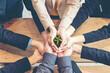 Leinwandbild Motiv Cropped Hands Of Colleagues Holding Plant