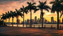 Beautiful View City Panorama Palms Miami Florida Buildings Offices Bridge House Tropical Florida Sun Sky Cute Sunset Downtown Usa