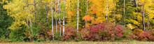614-21 Autumn Forest Edge Pano
