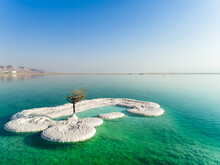 Aerial View Of A Dry And Leafless Tree Standing In A Salt Water. The Dead Sea, Negev, Israel.