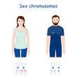 Sex chromosomes (X and Y chromosome)