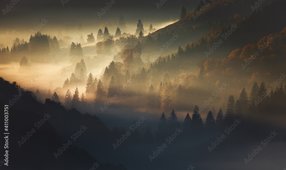 Fototapeta Scenic View Of Trees On Mountain In Foggy Weather