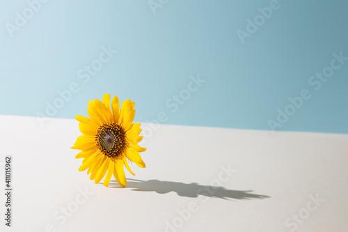 Yellow daisy flower against pastel blue and beige background Tapéta, Fotótapéta