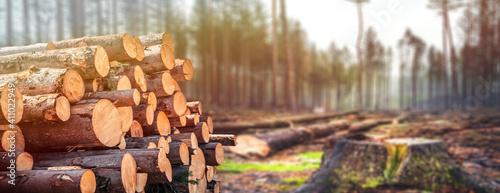 Foto Log spruce trunks pile