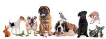 Various Animals Against White Background