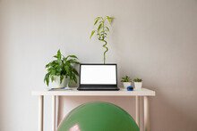 Mesa De Trabajo Con Pelota Pilates Y Plantas