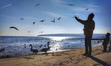 Man Standing While Birds Flying At Beach Against Sky During Sunny Day