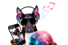 Dj Disco Dancing Music Dog