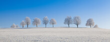 Bare Trees On Field Against Clear Blue Sky