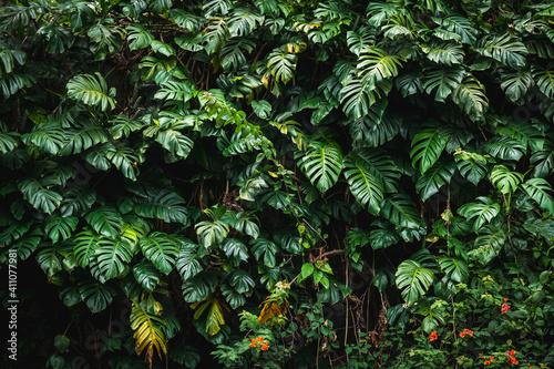 Obraz na plátně Tropical botanic wall 1