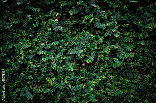 Foto Tropical botanic wall 3