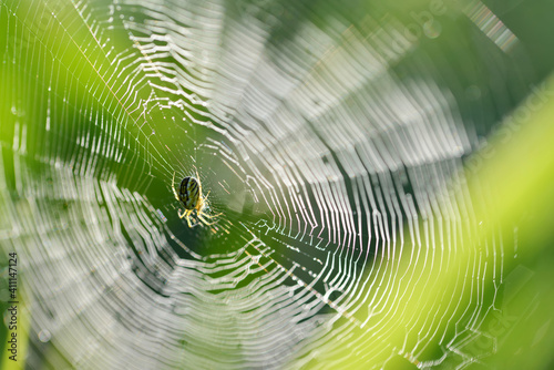 Fotografija Spider on a cobweb close up. Nature background.