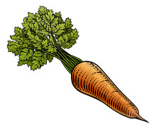 Carrot Vegetable Illustration In A Vintage Retro Woodcut Etching Style.