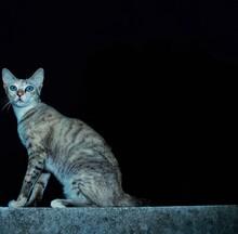 Portrait Of Tabby Cat Looking Away
