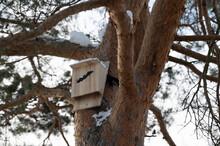 Bat House On Tree In Stockholm, Sweden